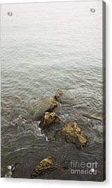 Surrounded Acrylic Print by Margie Hurwich