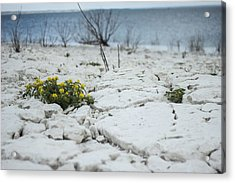 Acrylic Print featuring the photograph Survival by Amber Kresge