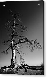 Survival Tree Acrylic Print by Chad Dutson