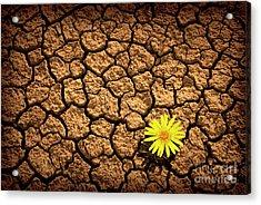 Survivor Acrylic Print by Carlos Caetano
