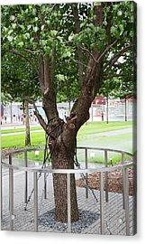 Survivor Tree Acrylic Print by Jim West