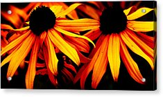 Susans On Fire Acrylic Print