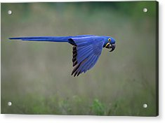 Suspended Acrylic Print by Greg Barsh