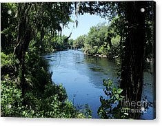 Suwanee River View Acrylic Print by Theresa Willingham