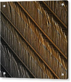 Swallow Feather Detail, Sem Acrylic Print by Power And Syred
