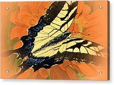 Swallow Tail Vignette Acrylic Print by Joel Deutsch