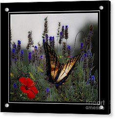 Swallowtail Among Blue Flowers Acrylic Print by John  Kolenberg
