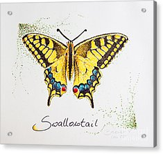 Swallowtail - Butterfly Acrylic Print by Katharina Filus