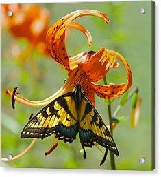 Swallowtail Butterfly3 Acrylic Print