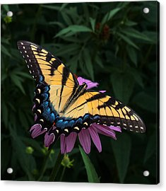 Swallowtail  Acrylic Print by Don Spenner