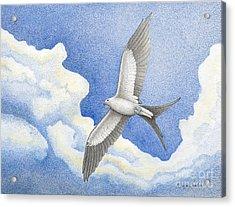 Swallowtail Kite Acrylic Print