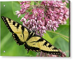 Swallowtail Notecard Acrylic Print by Everet Regal