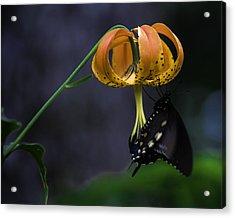 Swallowtail On Turks Cap Acrylic Print