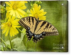 Acrylic Print featuring the photograph Swallowtail by Vicki DeVico