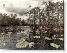 Swamp Alive Acrylic Print by Stellina Giannitsi