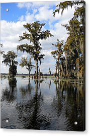 Swamp Acrylic Print by Beth Vincent