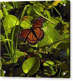 Swamp Butterfly Acrylic Print
