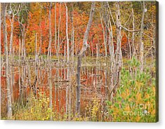 Swamp Colors Acrylic Print