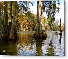 Swamp - Cypress Trees Acrylic Print