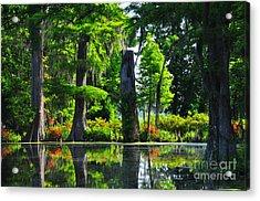 Swamp In Bloom Acrylic Print