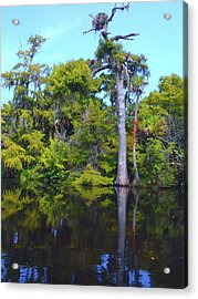 Swamp Land Acrylic Print