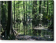 Swamp Land Acrylic Print by Cathy Harper