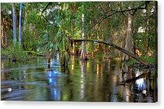 Swamp Life Acrylic Print