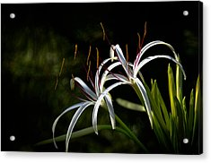 Swamp Lillies Acrylic Print by Bill Martin