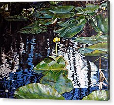 Swamp Lilly Acrylic Print by Dottie Branchreeves