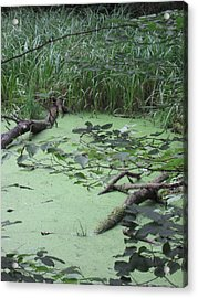 Acrylic Print featuring the photograph Swamp by Nora Boghossian