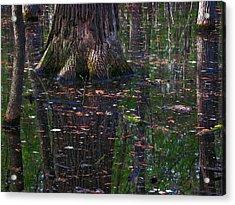 Acrylic Print featuring the photograph Swamp by Rowana Ray