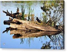 Swamp Scene Acrylic Print by Al Powell Photography USA