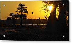 Acrylic Print featuring the photograph Swamp Sunrise by Silke Brubaker