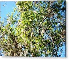 Swamp Tree Hugger Acrylic Print by Van Ness