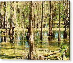 Swamp Wading 1 Acrylic Print by Van Ness