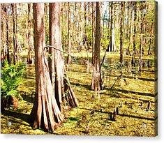 Swamp Wading 3 Acrylic Print by Van Ness
