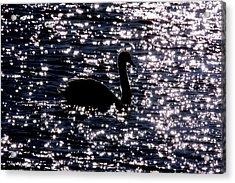 Swan Bay Acrylic Print