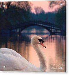 Swan Bridge Acrylic Print