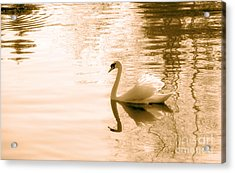 Swan Acrylic Print by Charline Xia