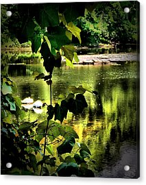 Swan Dive Acrylic Print
