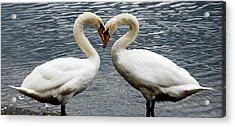 Swan Heart 2 Acrylic Print