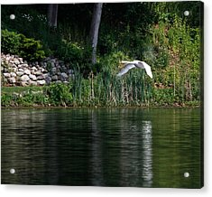 Acrylic Print featuring the photograph Swan In Flight by Eleanor Abramson