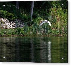 Swan In Flight Acrylic Print by Eleanor Abramson