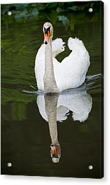 Acrylic Print featuring the photograph Swan In Motion by Gary Slawsky