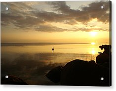 Swan In Sea At Sunset Acrylic Print by Gynt