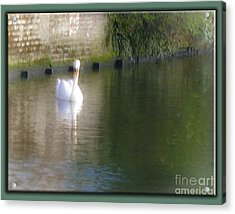 Acrylic Print featuring the photograph Swan In The Canal by Victoria Harrington