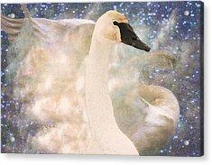 Swan Journey Acrylic Print