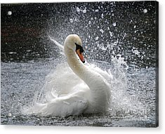 Acrylic Print featuring the photograph Swan by Kathy Gibbons