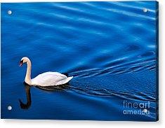 Swan Lake Acrylic Print by Adrian Evans