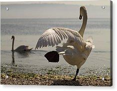 Swan Lake Acrylic Print by Karim SAARI